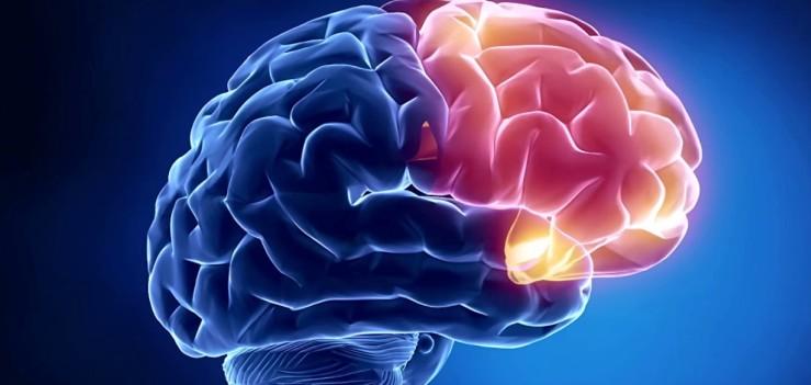 Прямой синус головного мозга
